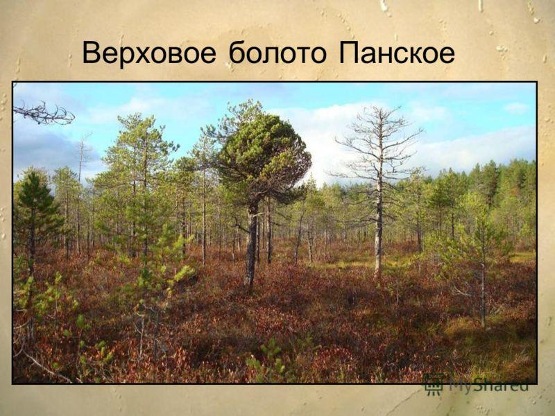 Верховое болото Панское
