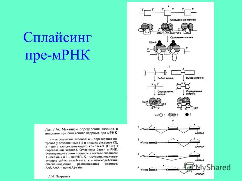 Сплайсинг пре-мРНК