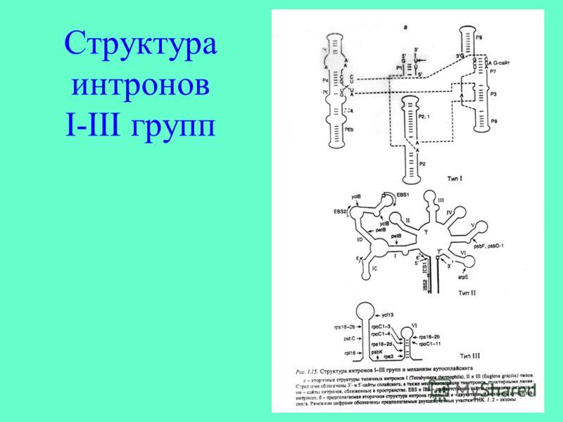 Структура интронов I-III групп
