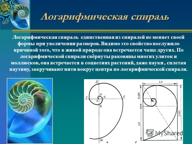 Логарифмическая спираль Логарифмическая спираль единственная из спиралей не меняет своей формы при увеличении размеров. Видимо это свойство послужило причиной того, что в живой природе она встречается чаще других. По логарифмической спирали свёрнуты