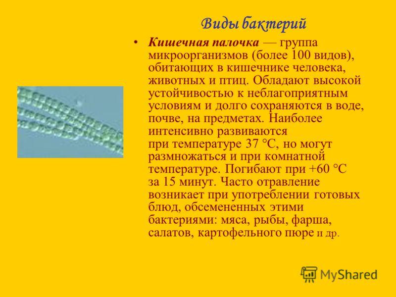 Виды бактерий Кишечная палочка группа микроорганизмов (более 100 видов), обитающих в кишечнике человека, животных и птиц. Обладают высокой устойчивостью к неблагоприятным условиям и долго сохраняются в воде, почве, на предметах. Наиболее интенсивно р