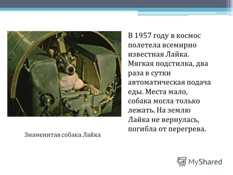 В 1957 году в космос полетела всемирно известная Лайка. Мягкая подстилка, два раза в сутки автоматическая подача еды. Места мало, собака могла только лежать. На землю Лайка не вернулась, погибла от перегрева. Знаменитая собака Лайка