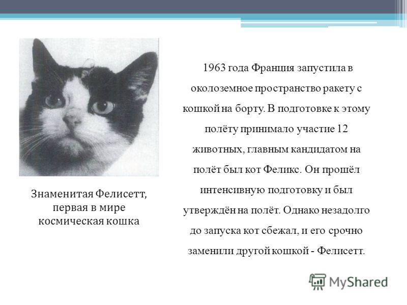 1963 года Франция запустила в околоземное пространство ракету с кошкой на борту. В подготовке к этому полёту принимало участие 12 животных, главным кандидатом на полёт был кот Феликс. Он прошёл интенсивную подготовку и был утверждён на полёт. Однако