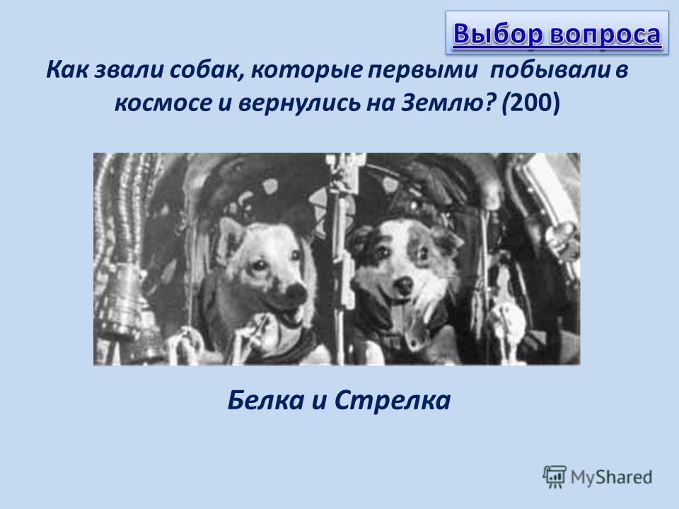 Как звали собак, которые первыми побывали в космосе и вернулись на Землю? (200) Белка и Стрелка