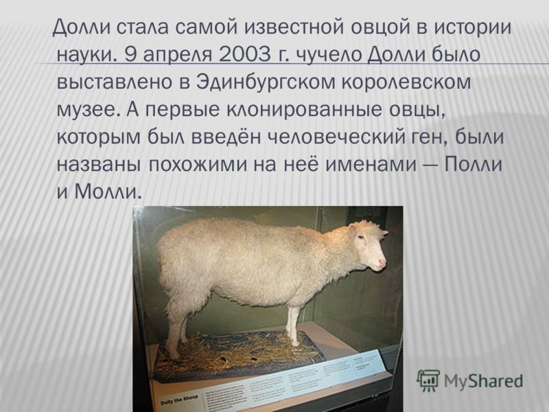 Долли стала самой известной овцой в истории науки. 9 апреля 2003 г. чучело Долли было выставлено в Эдинбургском королевском музее. А первые клонированные овцы, которым был введён человеческий ген, были названы похожими на неё именами Полли и Молли.
