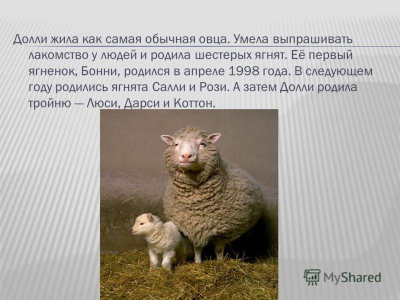 Долли жила как самая обычная овца. Умела выпрашивать лакомство у людей и родила шестерых ягнят. Её первый ягненок, Бонни, родился в апреле 1998 года. В следующем году родились ягнята Салли и Рози. А затем Долли родила тройню Люси, Дарси и Коттон.