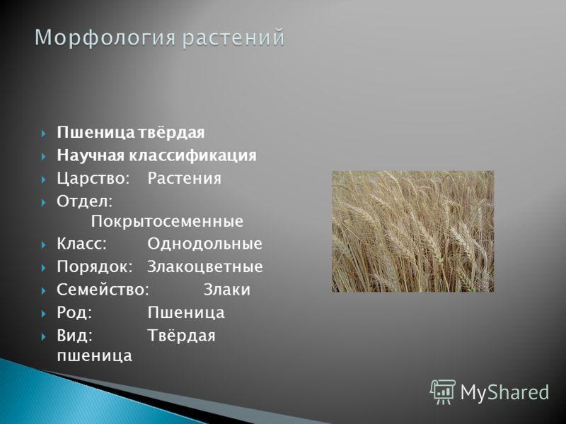 Пшеница твёрдая Научная классификация Царство:Растения Отдел: Покрытосеменные Класс:Однодольные Порядок:Злакоцветные Семейство:Злаки Род:Пшеница Вид:Твёрдая пшеница