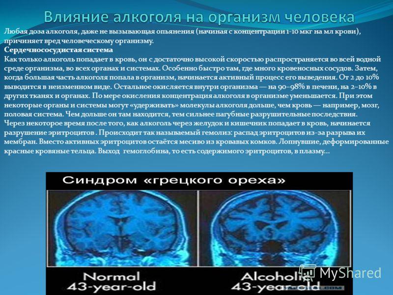 Любая доза алкоголя, даже не вызывающая опьянения (начиная с концентрации 1-10 мкг на мл крови), причиняет вред человеческому организму. Сердечнососудистая система Как только алкоголь попадает в кровь, он с достаточно высокой скоростью распространяет