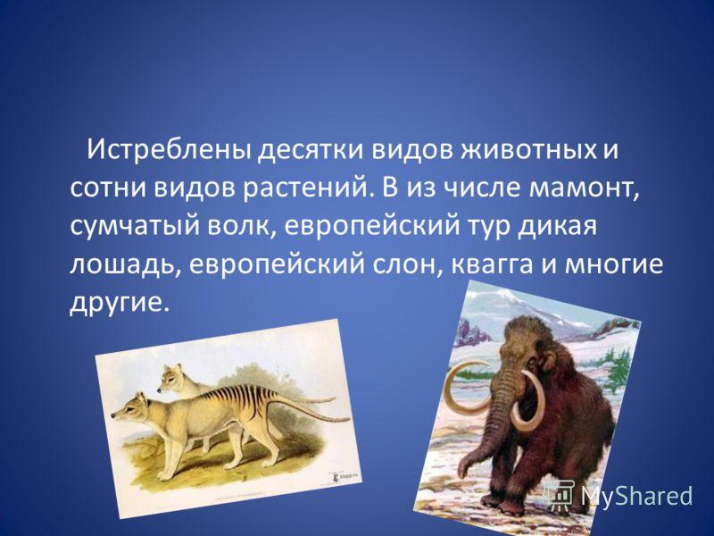 Истреблены десятки видов животных и сотни видов растений. В из числе мамонт, сумчатый волк, европейский тур дикая лошадь, европейский слон, квагга и многие другие.