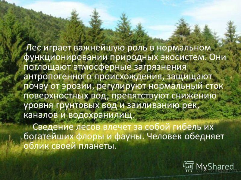 Лес играет важнейшую роль в нормальном функционировании природных экосистем. Они поглощают атмосферные загрязнения антропогенного происхождения, защищают почву от эрозии, регулируют нормальный сток поверхностных вод, препятствуют снижению уровня грун