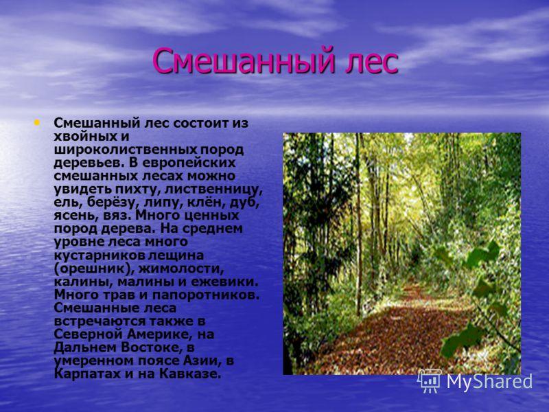Смешанный лес Смешанный лес состоит из хвойных и широколиственных пород деревьев. В европейских смешанных лесах можно увидеть пихту, лиственницу, ель, берёзу, липу, клён, дуб, ясень, вяз. Много ценных пород дерева. На среднем уровне леса много кустар