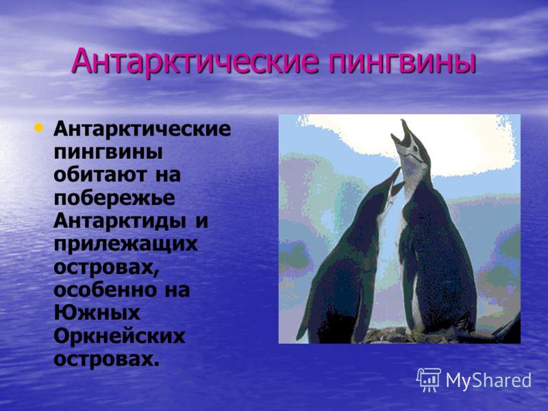 Антарктические пингвины Антарктические пингвины обитают на побережье Антарктиды и прилежащих островах, особенно на Южных Оркнейских островах.