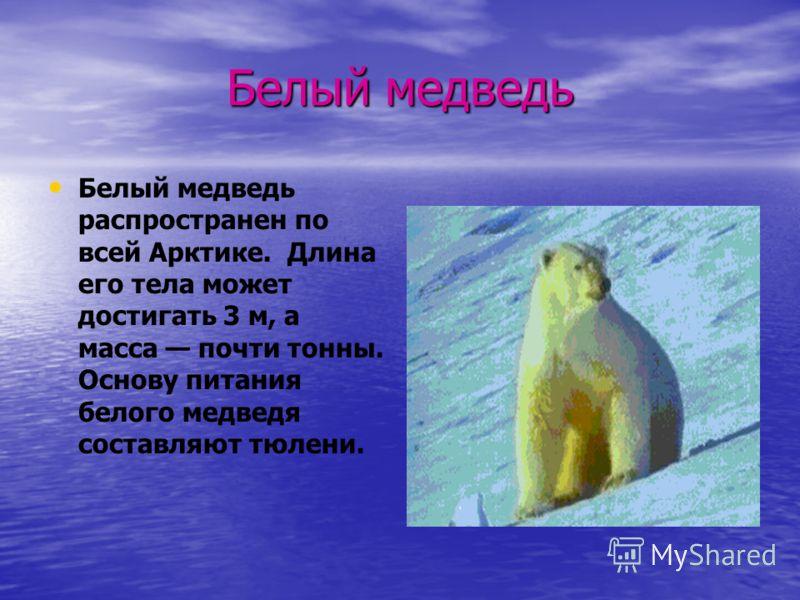 Белый медведь Белый медведь распространен по всей Арктике. Длина его тела может достигать 3 м, а масса почти тонны. Основу питания белого медведя составляют тюлени.