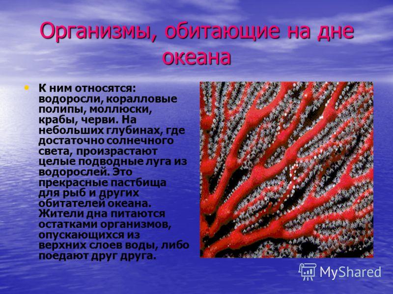 Организмы, обитающие на дне океана К ним относятся: водоросли, коралловые полипы, моллюски, крабы, черви. На небольших глубинах, где достаточно солнечного света, произрастают целые подводные луга из водорослей. Это прекрасные пастбища для рыб и други