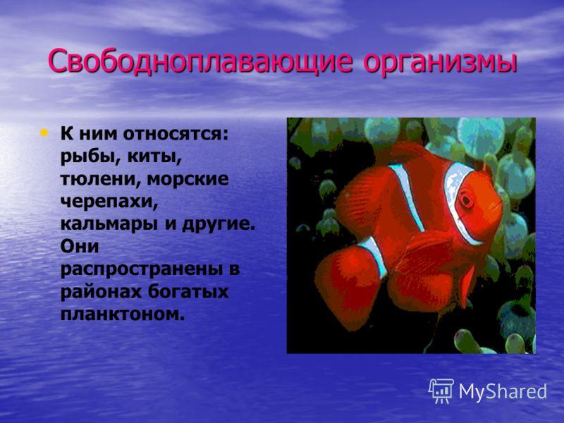 Свободноплавающие организмы К ним относятся: рыбы, киты, тюлени, морские черепахи, кальмары и другие. Они распространены в районах богатых планктоном.