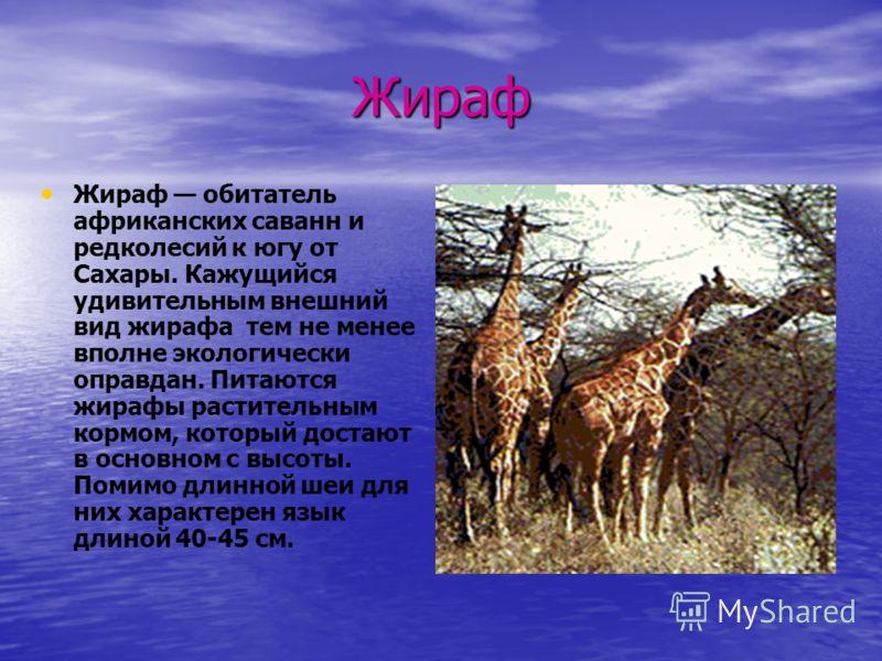 Жираф Жираф обитатель африканских саванн и редколесий к югу от Сахары. Кажущийся удивительным внешний вид жирафа тем не менее вполне экологически оправдан. Питаются жирафы растительным кормом, который достают в основном с высоты. Помимо длинной шеи д