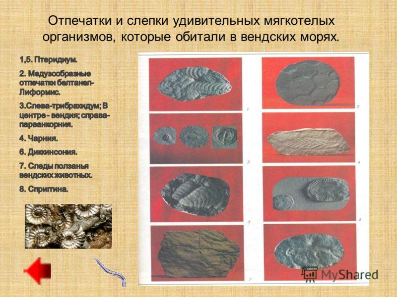 Животный мир Кембрий В ходе грандиозного эволюционного взрыва возникло большинство современных типов животных, включая микроскопических фораминифер, губок, морских звезд, морских ежей, морских лилий и различных червей. В тропиках археоциаты возводили
