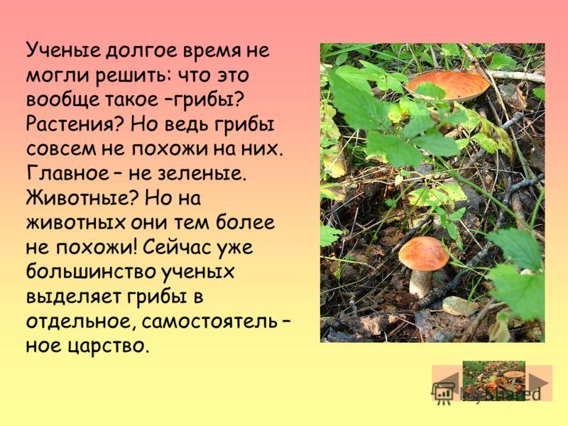 Ученые долгое время не могли решить: что это вообще такое –грибы? Растения? Но ведь грибы совсем не похожи на них. Главное – не зеленые. Животные? Но на животных они тем более не похожи! Сейчас уже большинство ученых выделяет грибы в отдельное, самос