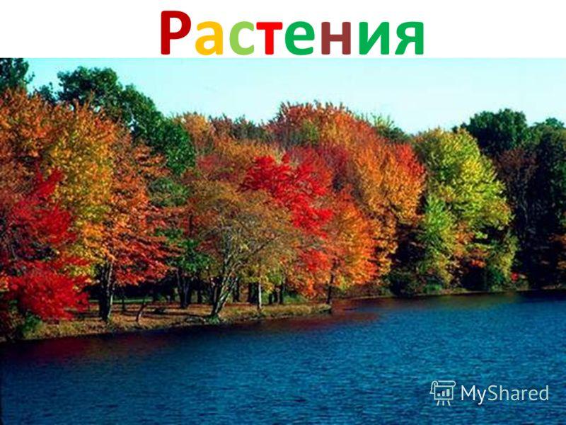 Осеннее солнце поднимается уже не так высоко, как летом, поэтому его лучи не прогревают землю. Температура воздуха становится холоднее.