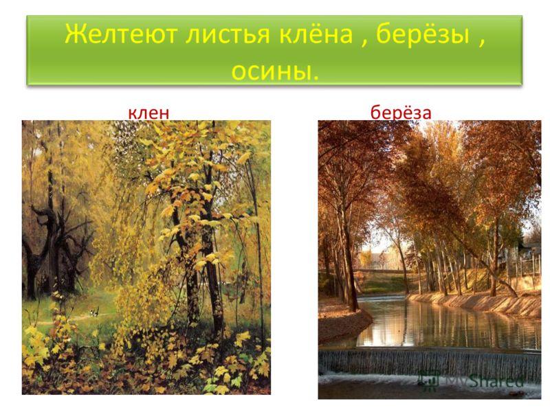 Изменения в неживой природе Основное изменение в неживой природе –похолодание - влечёт за собой изменения в живой природе. С приходом осени листья растений меняют окраску.Деревья подготавливаются к зимним холодам