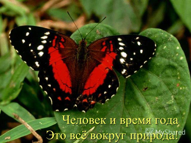 Человек и время года Это всё вокруг природа! Человек и время года Это всё вокруг природа!