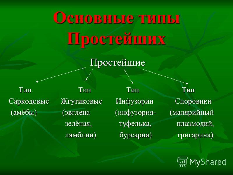 Основные типы Простейших Простейшие Тип Тип Тип Тип Тип Тип Тип Тип Саркодовые Жгутиковые Инфузории Споровики (амёбы) (эвглена (инфузория- (малярийный (амёбы) (эвглена (инфузория- (малярийный зелёная, туфелька, плазмодий, зелёная, туфелька, плазмодий