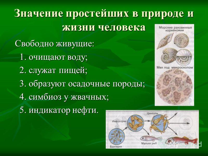 Значение простейших в природе и жизни человека Свободно живущие: Свободно живущие: 1. очищают воду; 1. очищают воду; 2. служат пищей; 2. служат пищей; 3. образуют осадочные породы; 3. образуют осадочные породы; 4. симбиоз у жвачных; 4. симбиоз у жвач