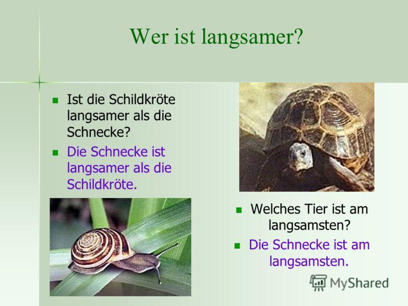 Wer ist langsamer? Ist die Schildkröte langsamer als die Schnecke? Die Schnecke ist langsamer als die Schildkröte. Welches Tier ist am langsamsten? Die Schnecke ist am langsamsten.