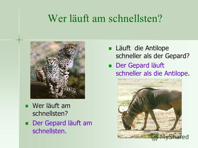 Wer läuft am schnellsten? Läuft die Antilope schneller als der Gepard? Läuft die Antilope schneller als der Gepard?. Der Gepard läuft schneller als die Antilope. Wer läuft am schnellsten? Wer läuft am schnellsten? Der Gepard läuft am schnellsten.