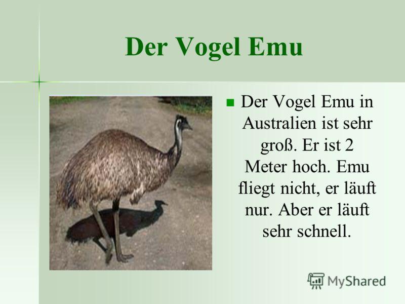 Der Vogel Emu Der Vogel Emu in Australien ist sehr groß. Er ist 2 Meter hoch. Emu fliegt nicht, er läuft nur. Aber er läuft sehr schnell.