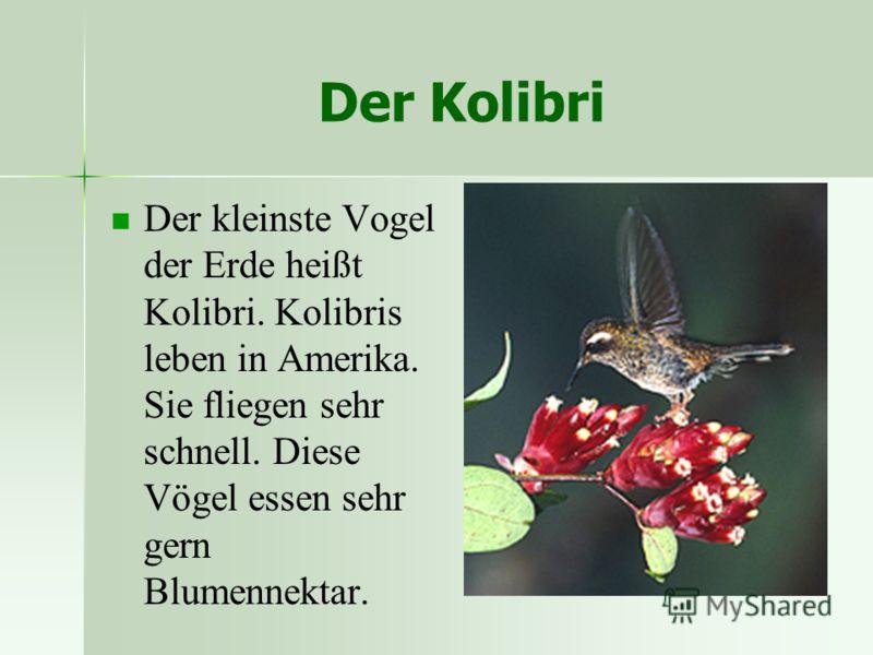 Der Kolibri Der kleinste Vogel der Erde heißt Kolibri. Kolibris leben in Amerika. Sie fliegen sehr schnell. Diese Vögel essen sehr gern Blumennektar.
