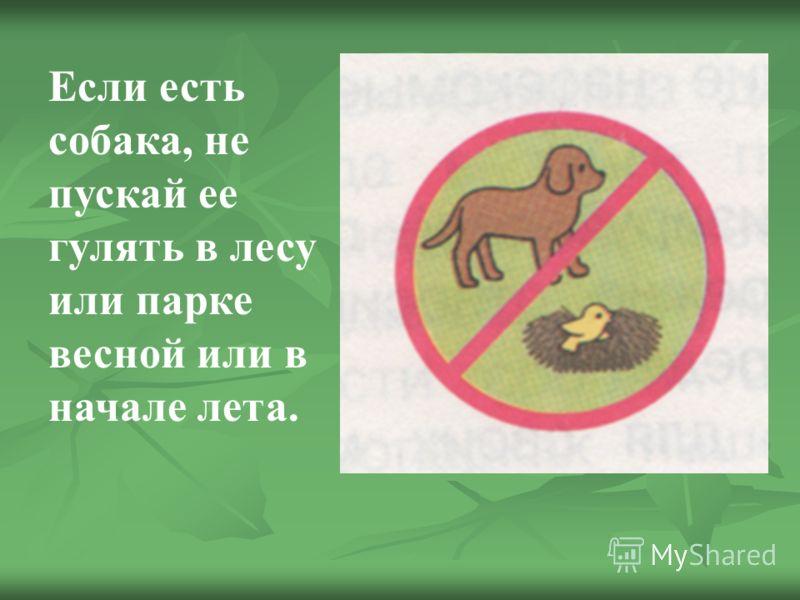 Если есть собака, не пускай ее гулять в лесу или парке весной или в начале лета.