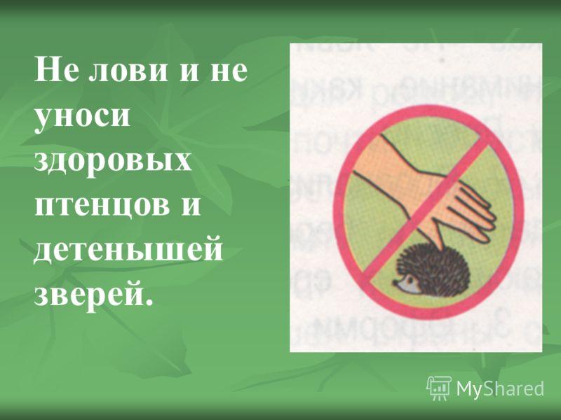 Не лови и не уноси здоровых птенцов и детенышей зверей.