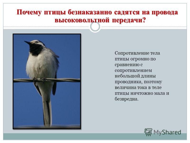 Почему птицы безнаказанно садятся на провода высоковольтной передачи? Сопротивление тела птицы огромно по сравнению с сопротивлением небольшой длины проводника, поэтому величина тока в теле птицы ничтожно мала и безвредна.