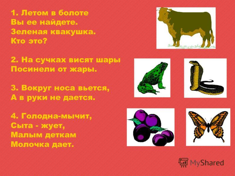 1. Летом в болоте Вы ее найдете. Зеленая квакушка. Кто это? 2. На сучках висят шары Посинели от жары. 3. Вокруг носа вьется, А в руки не дается. 4. Голодна-мычит, Сыта - жует, Малым деткам Молочка дает.