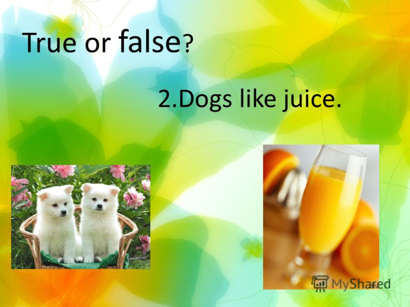 True or false ? 2.Dogs like juice.