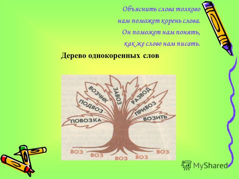 Объяснить слова толково нам поможет корень слова. Он поможет нам понять, как же слово нам писать. Дерево однокоренных слов