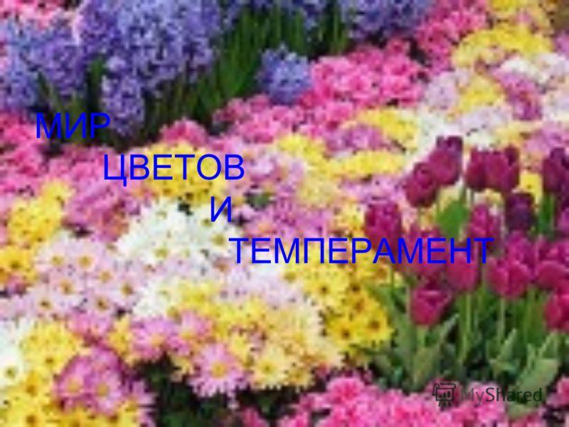 МИР ЦВЕТОВ И ТЕМПЕРАМЕНТ