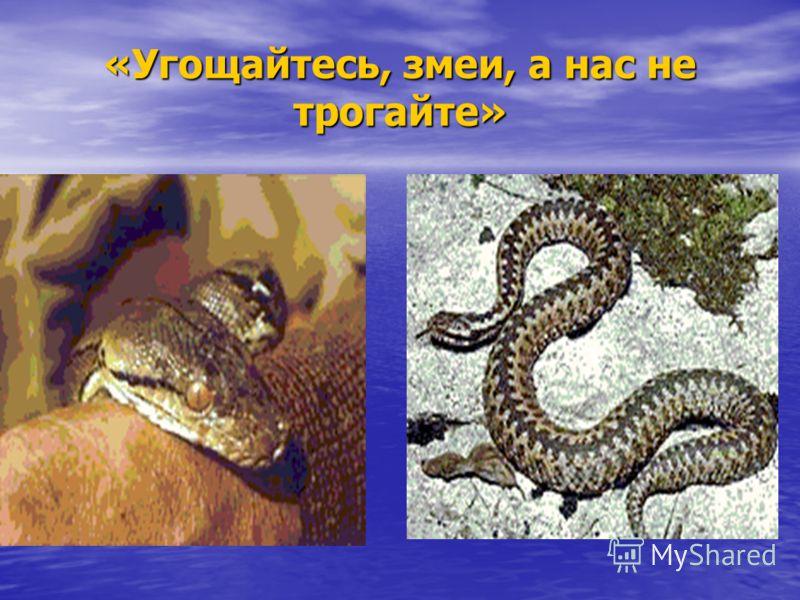 «Угощайтесь, змеи, а нас не трогайте»