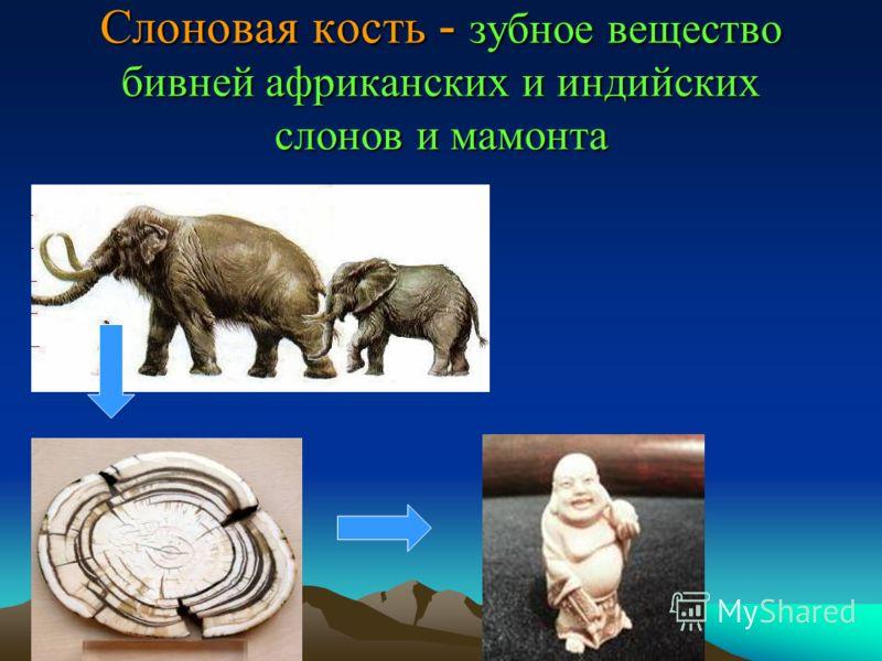 Слоновая кость - зубное вещество бивней африканских и индийских слонов и мамонта
