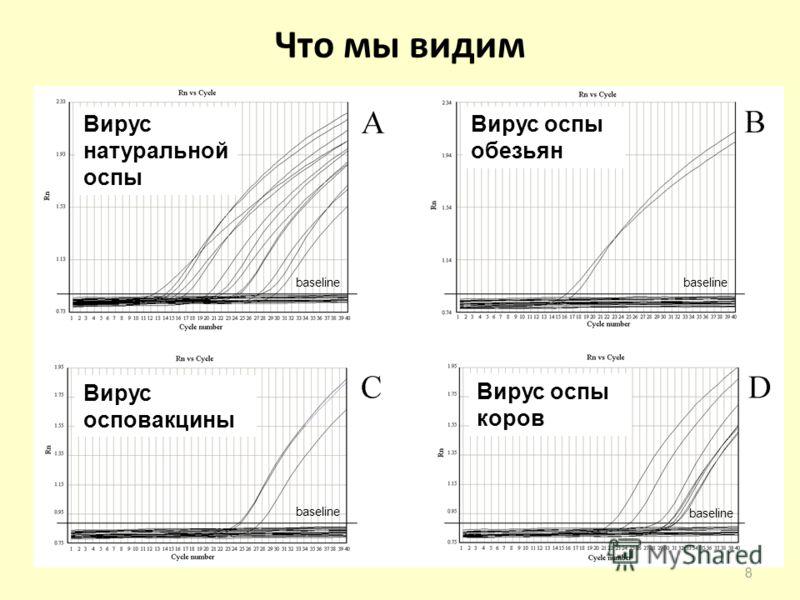 Что мы видим baseline 8 Вирус натуральной оспы Вирус оспы обезьян Вирус осповакцины Вирус оспы коров