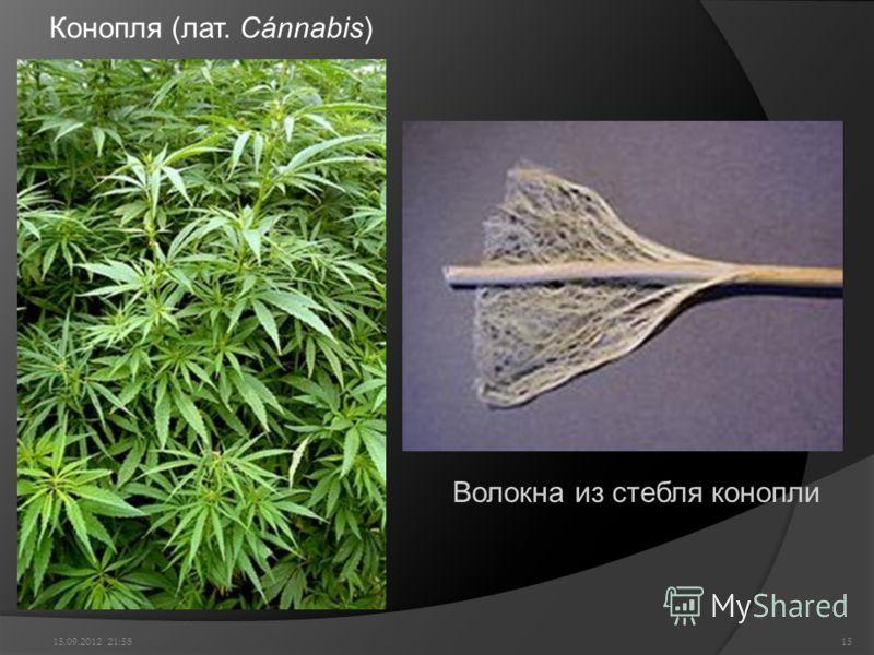 Конопля (лат. Cánnabis) 15.09.2012 22:0015 Волокна из стебля конопли