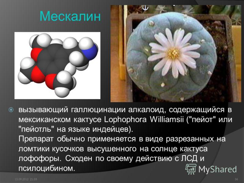 Мескалин вызывающий галлюцинации алкалоид, содержащийся в мексиканском кактусе Lophophora Williamsii (