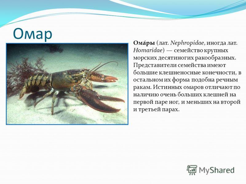 Омар Ома́ры (лат. Nephropidae, иногда лат. Homaridae) семейство крупных морских десятиногих ракообразных. Представители семейства имеют большие клешненосные конечности, в остальном их форма подобна речным ракам. Истинных омаров отличают по наличию оч