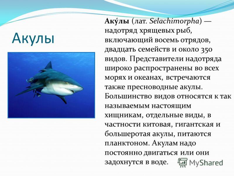 Акулы Аку́лы (лат. Selachimorpha) надотряд хрящевых рыб, включающий восемь отрядов, двадцать семейств и около 350 видов. Представители надотряда широко распространены во всех морях и океанах, встречаются также пресноводные акулы. Большинство видов от
