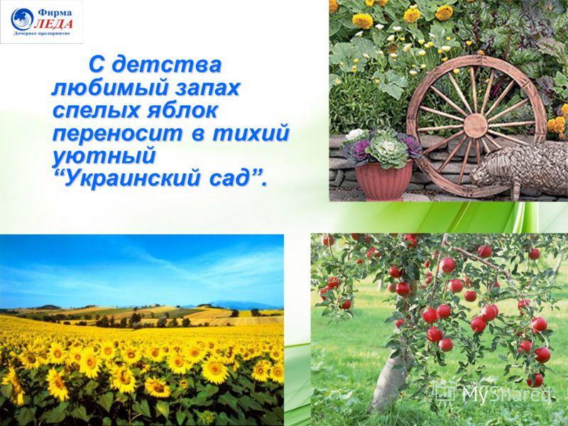 С детства любимый запах спелых яблок переносит в тихий уютный Украинский сад.