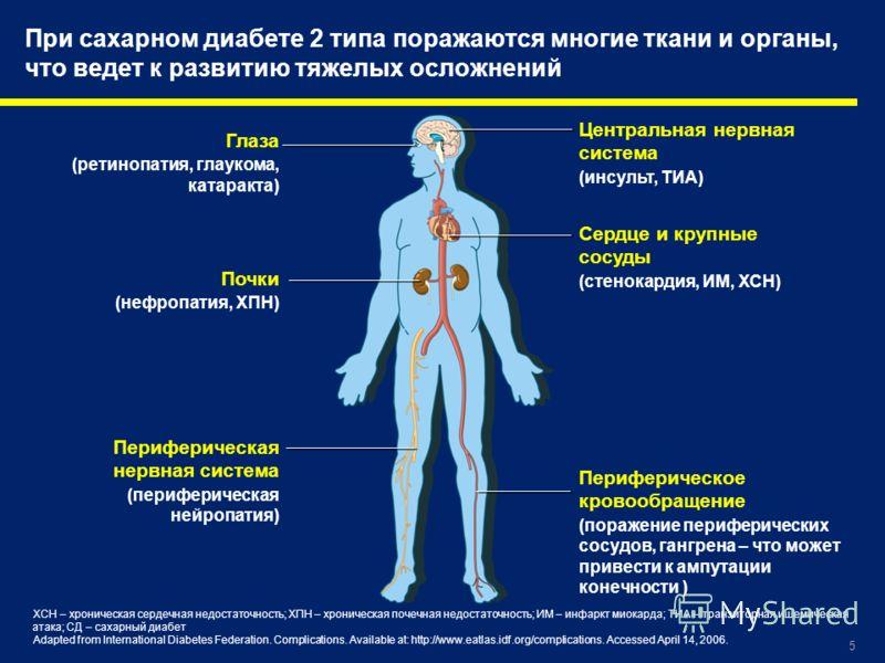 5 Глаза (ретинопатия, глаукома, катаракта) Центральная нервная система (инсульт, ТИА) Сердце и крупные сосуды (стенокардия, ИМ, ХСН) Почки (нефропатия, ХПН) Периферическая нервная система (периферическая нейропатия) Периферическое кровообращение (пор