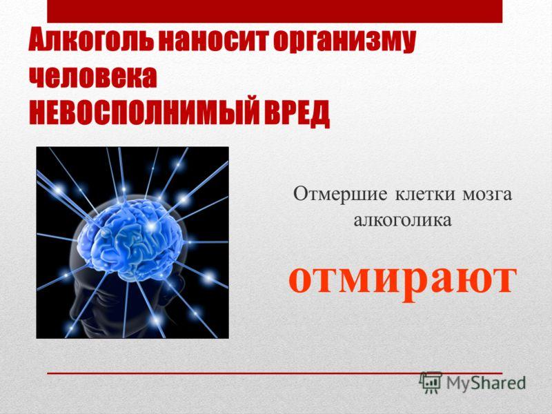 Алкоголь наносит организму человека НЕВОСПОЛНИМЫЙ ВРЕД Отмершие клетки мозга алкоголика отмирают