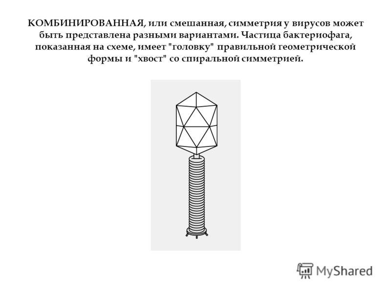 КОМБИНИРОВАННАЯ, или смешанная, симметрия у вирусов может быть представлена разными вариантами. Частица бактериофага, показанная на схеме, имеет головку правильной геометрической формы и хвост со спиральной симметрией.