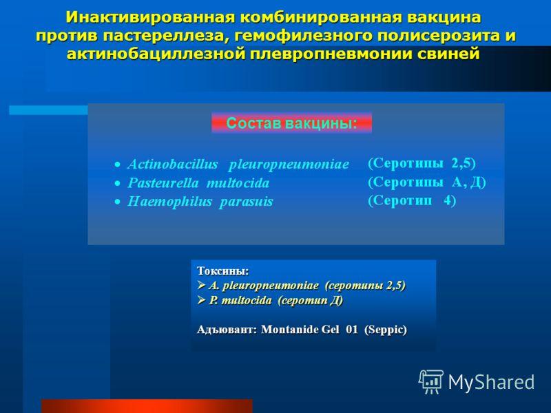 Инактивированная комбинированная вакцина против пастереллеза, гемофилезного полисерозита и актинобациллезной плевропневмонии свиней против пастереллеза, гемофилезного полисерозита и актинобациллезной плевропневмонии свиней Токсины: A. pleuropneumonia